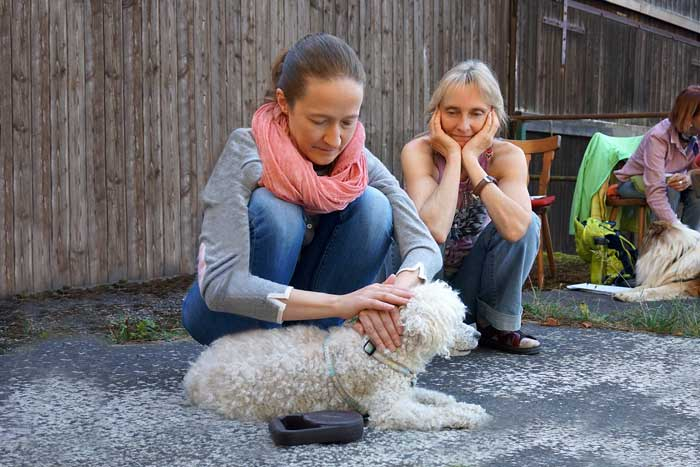 Healing Touch for Animals HTA Behandlung am Hund
